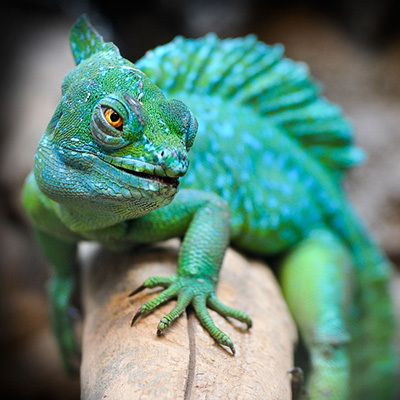 Are You Smarter Than A Reptile
