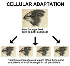 Cellular Adaptation